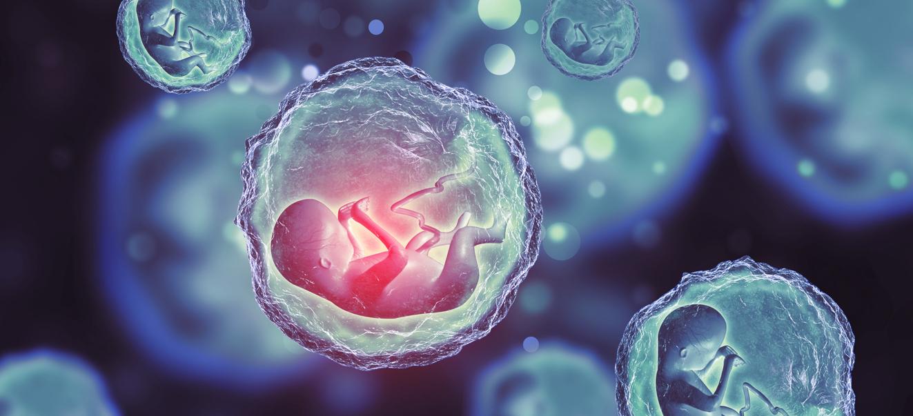 Криоконсервация эмбрионов по ОМС 2019: особенности процедуры